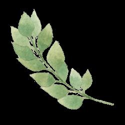 Sencha Leaf