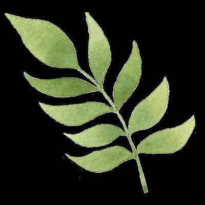 Sencha Botanics