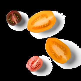 Sencha tomaatjes